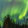 Northern Lights Sapmi Forest Karasjok Norway by Adam Rainoff