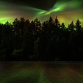 Northern Lights Woodland  by Gigi Ebert