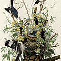 Northern Mockingbird by Granger