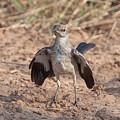 Northern Mockingbird by Ronnie Maum