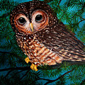 Northern Spotted Owl by Nick Gustafson