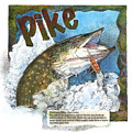 Northerrn Pike by John Dyess