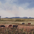 Northwest Oklahoma Cattle Country by Sam Sidders