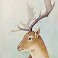 Norway Deer by Olga Yatsenko