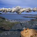 Norway Sheep Wool Getting Rolled by Keenpress