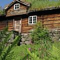 Norwegian Wood by PJ Boylan