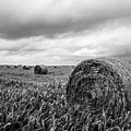 Nostalgia - Hay Bales In Field In Black And White by Southern Plains Photography