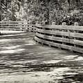 Nostalgic Pathway by Paul Schreiber