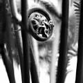 Not Quite Unfurled Fiddlehead Fern In Black And White by Angela Rath