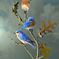 Nothing But Bluebirds by IM Spadecaller