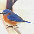 Eastern Bluebird Perch by Ola Allen