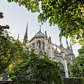 Notre Dame Cathedral - Paris, France by Melanie Alexandra Price