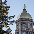 Notre Dame Dome With Tree by John McGraw
