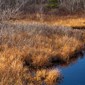November Brook And Wetland Barren  by Irwin Barrett