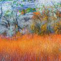 November by Dean Arneson