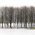 November Flood 2 by Jim Young