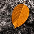 November Leaf by Ari Salmela