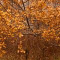November Oak by Irwin Barrett