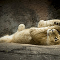 Now I Lay Me Down To Sleep by Linda D Lester