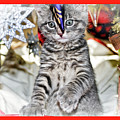 Now Where Did That Ornament Go I Just Saw It A Second Ago by Geraldine Scull