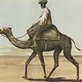 Noyes, Edward , Riding Camel by Noyes Edward