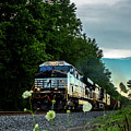 Ns 62w With Blurred Flowers by Andrew Craun