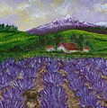 Nui In Lavender Field by Laura Johnson