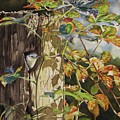 Nuthatch And Creeper by Greg and Linda Halom