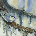Nuthatch by Dolores Fegan