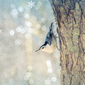 Nuthatch Season's Greetings by Rima Biswas