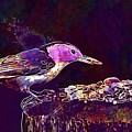 Nuthatch White Breasted Nuthatch  by PixBreak Art