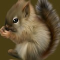 Nutkin by Dave H