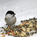 Nuts Said The Willow by Jouko Lehto