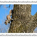 Nutsnutsnuts by Bernd Billmayer