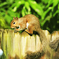 Nutty Buddies by Ola Allen