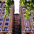 Nyc Building With Tree Overhang by Matt Harang