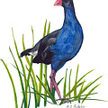 Nz Native Pukeko Bird by Christina Maassen