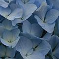 O Sapphire Heaven Soft And Low  by Sharon Mau