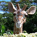 Oahu Giraffe by Michael Lewis