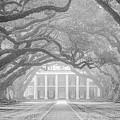 Oak Alley Fog by Andy Crawford