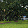 Oak Alley Plantation In The Summer Time by Chris Coffee