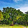 Oak Alley Plantation by Steve Harrington