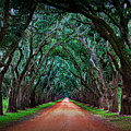Oak Alley Road by Perry Webster