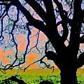Oak At Elkhorn by Scott L Holtslander