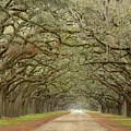 Oak Avenue by Jeffrey Schreier