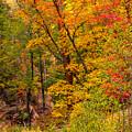 Oak Creek 1 by Jason Keefe