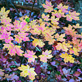 Oak Creek Canyon Fall Colors by Dave Dilli
