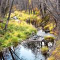 Oak Creek Twilight by Carl Amoth