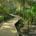 Oak Hammock Trail, Florida by Kenneth Murray