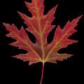 Autmn Leaf by Karl Fritz